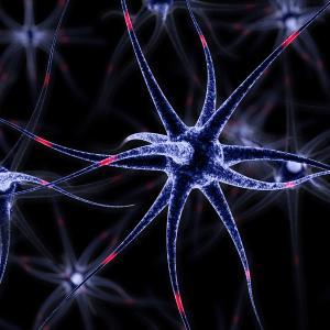 Шизофренията е причинена от помощни клетки в мозъка
