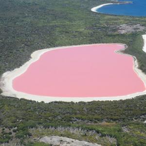 Тайната на уникалното розово езеро Хилиър