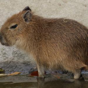 Това са най-сладките животни на планетата