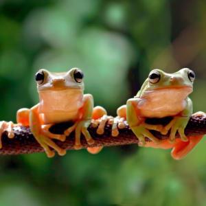 Притча за жабите
