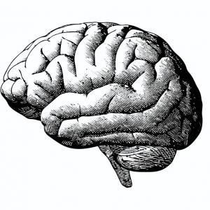 Виц: Колко струва мозъкът на един учен?