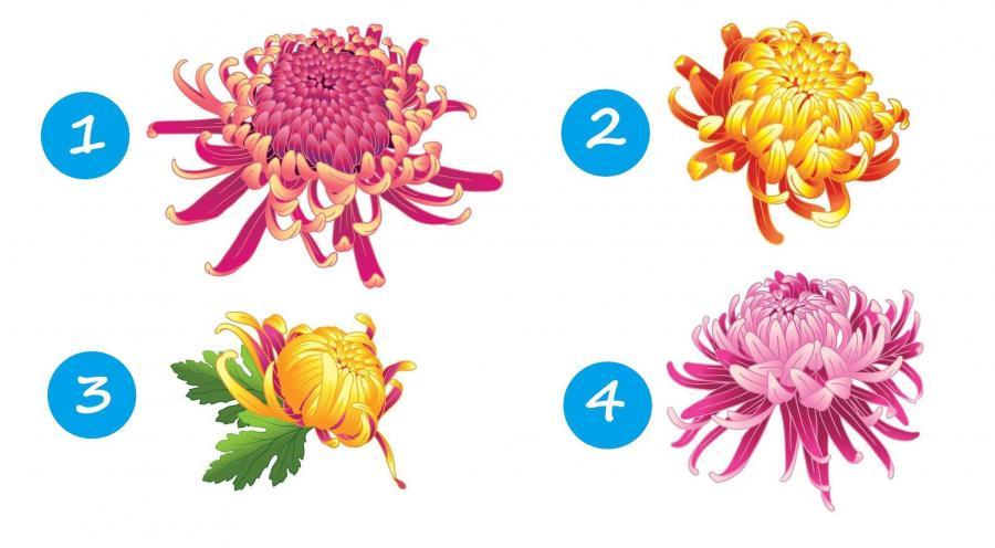 тест: выберите хризантему
