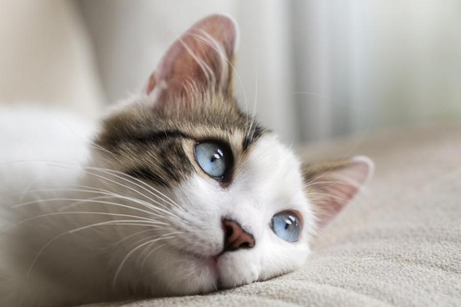 50 изумителни факта за котките | Обекти