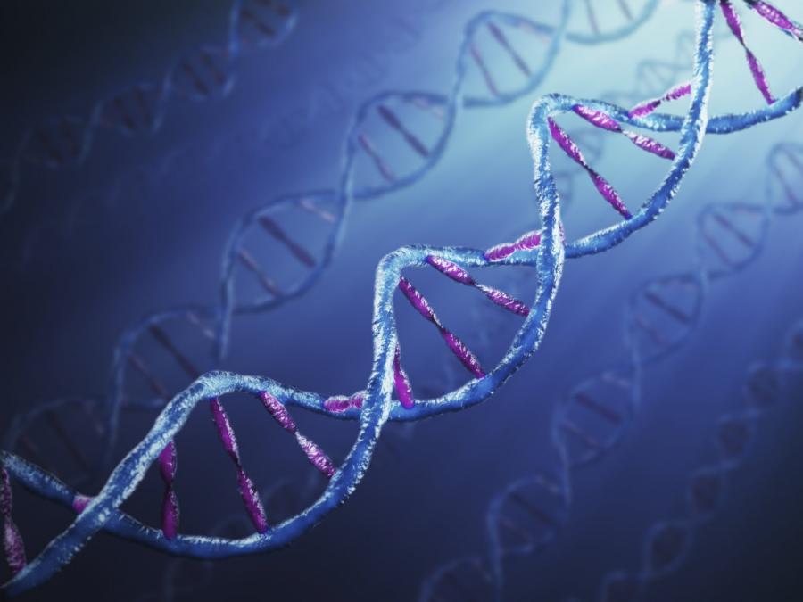 10 интересни факта за ДНК | Обекти